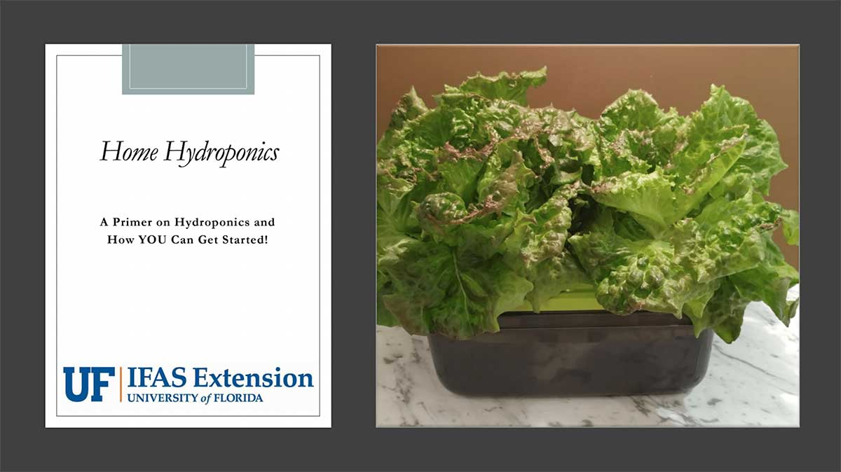 Identifying Vegetable Diseases in the Home Garden Presentation Cover