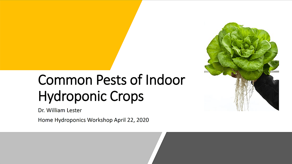 common pests indoor hydroponics presentation cover